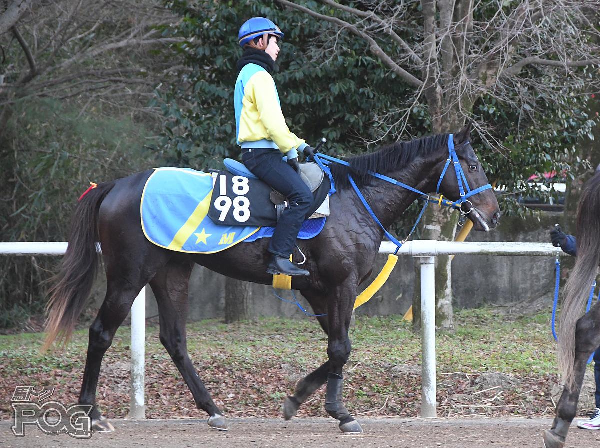 ヤサカファルコの馬体写真