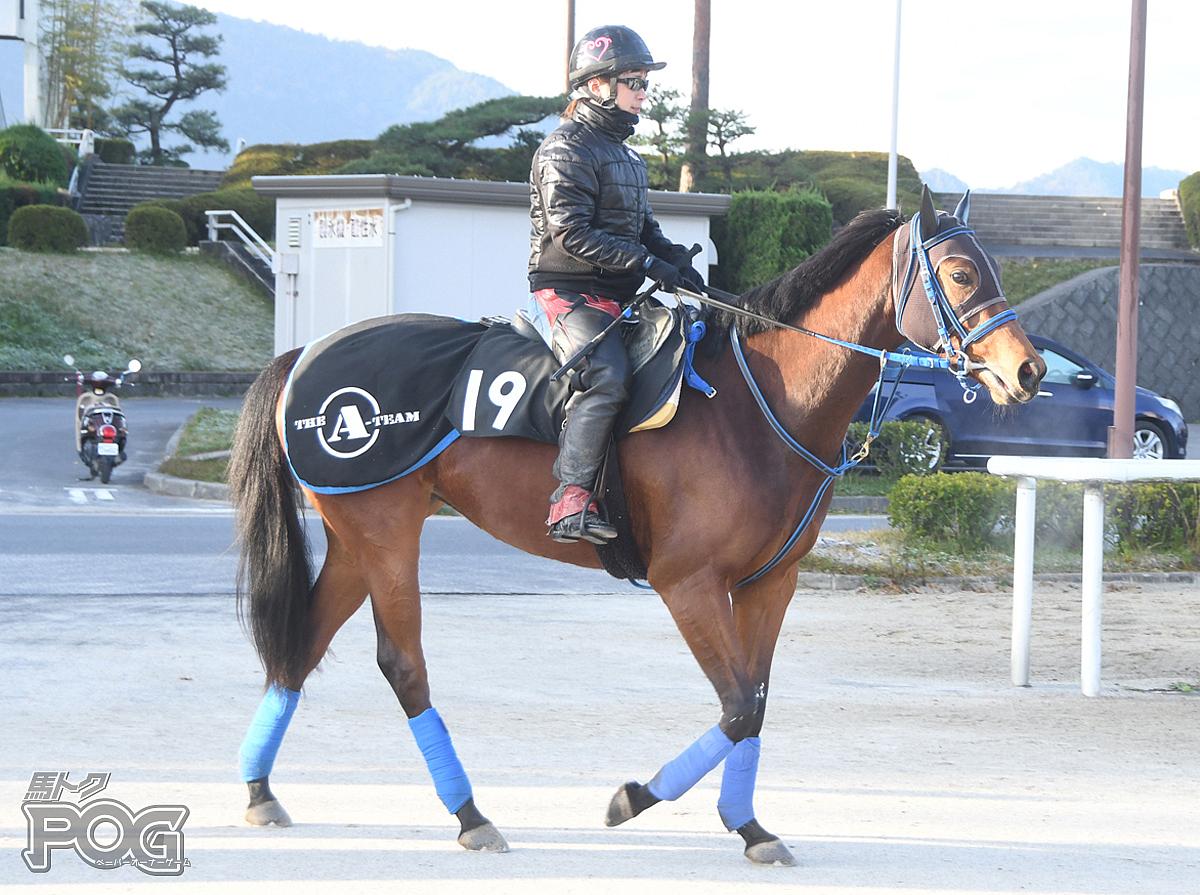 アオイチャンの馬体写真