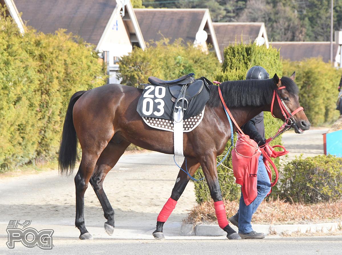 クリノゴーギャンの馬体写真