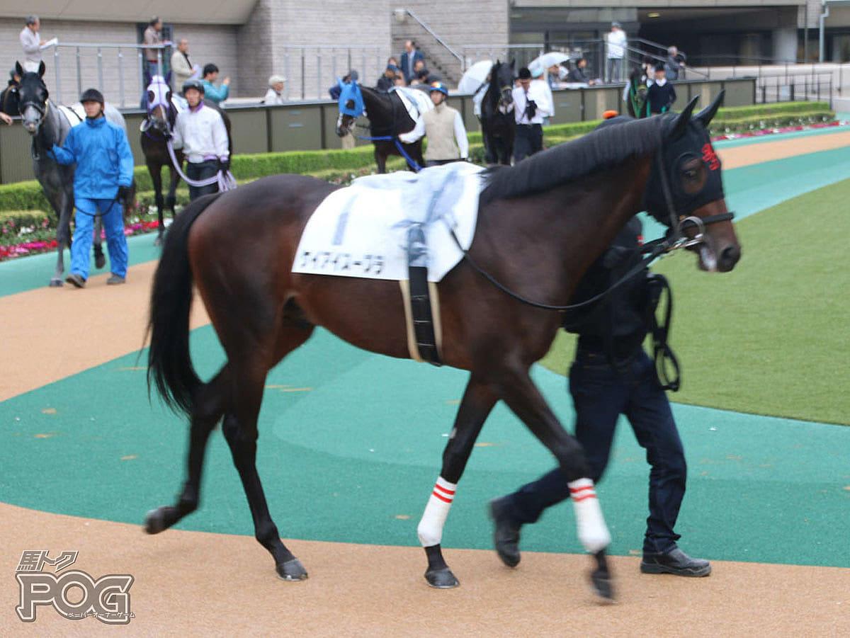 ケイアイスープラの馬体写真