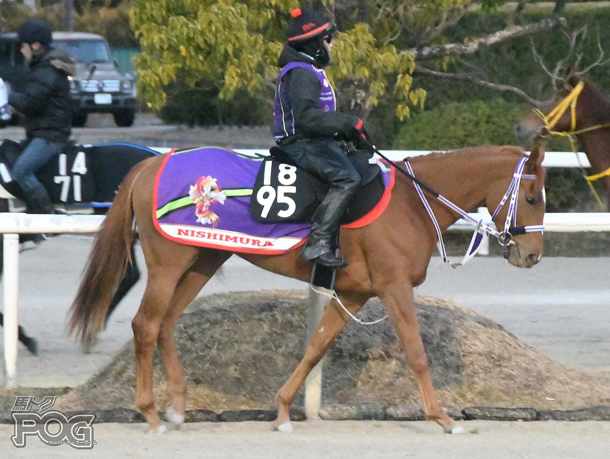 クインズアリエスの馬体写真