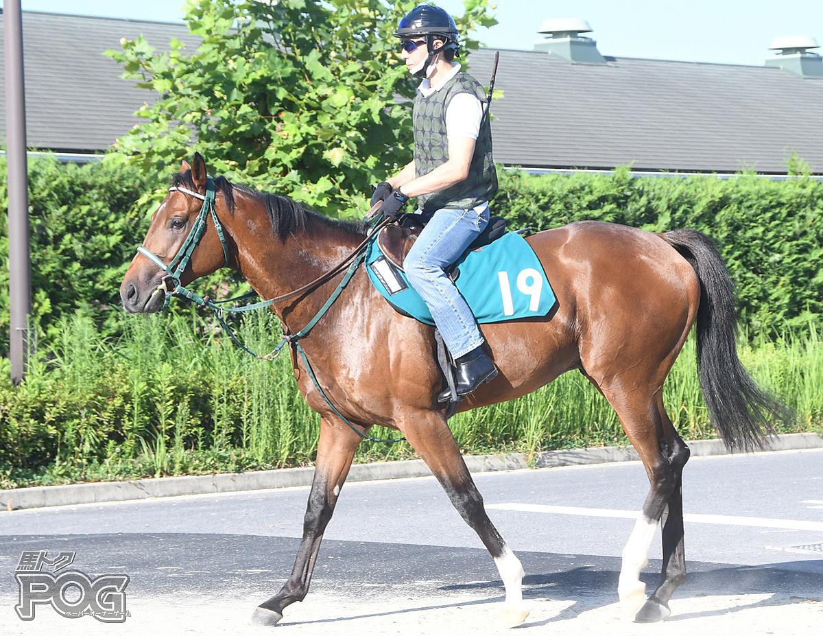 キクノウェスターの馬体写真