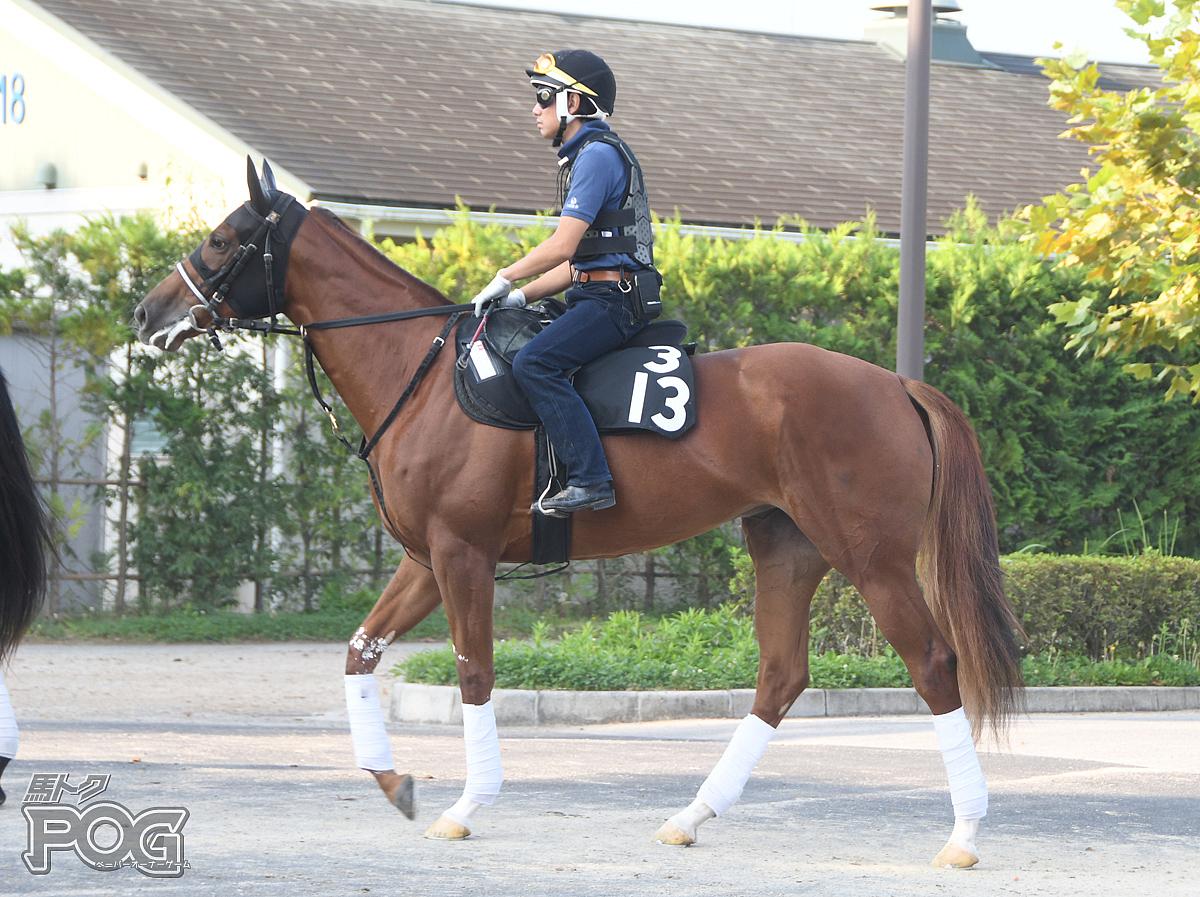 クロンヌデトワールの馬体写真