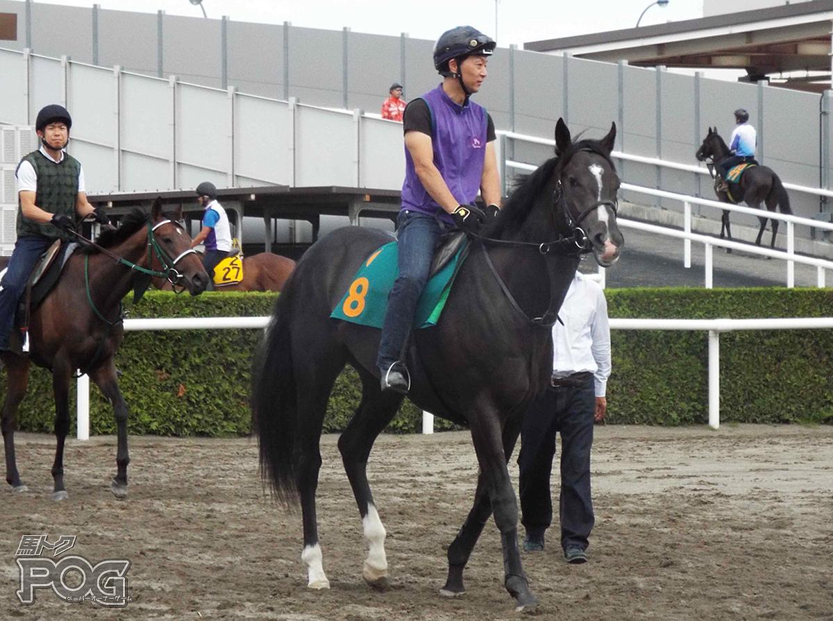 ゴーフォザサミットの馬体写真
