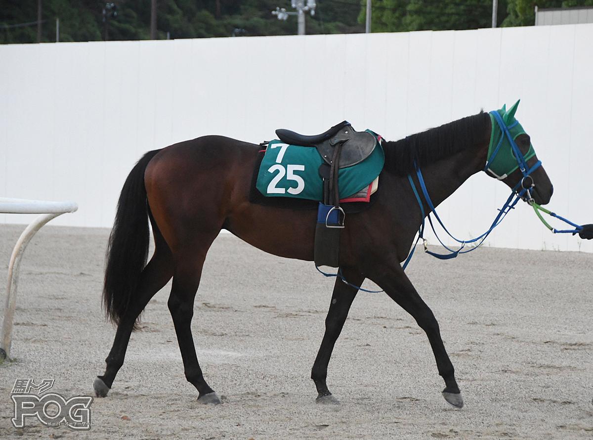 ブルベアブロッコリの馬体写真