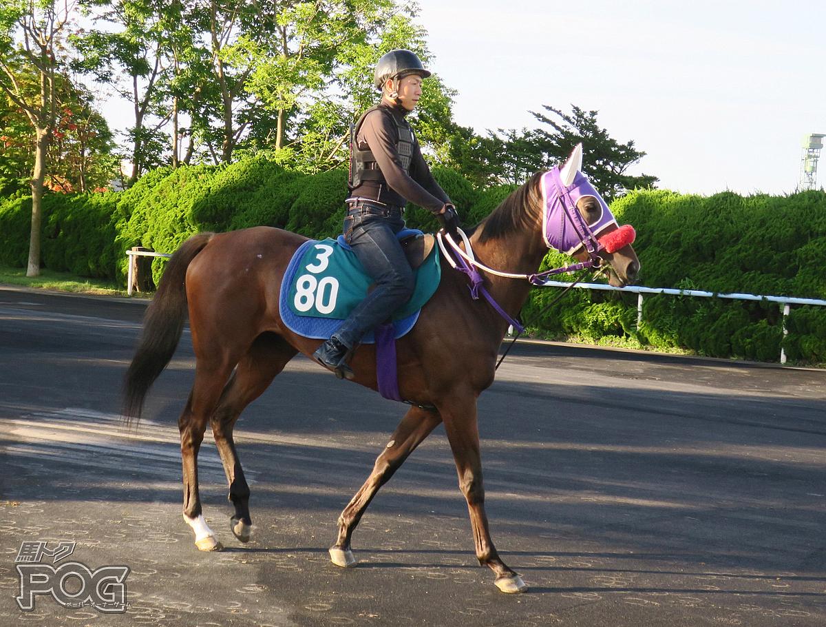 クローバーレッドの馬体写真