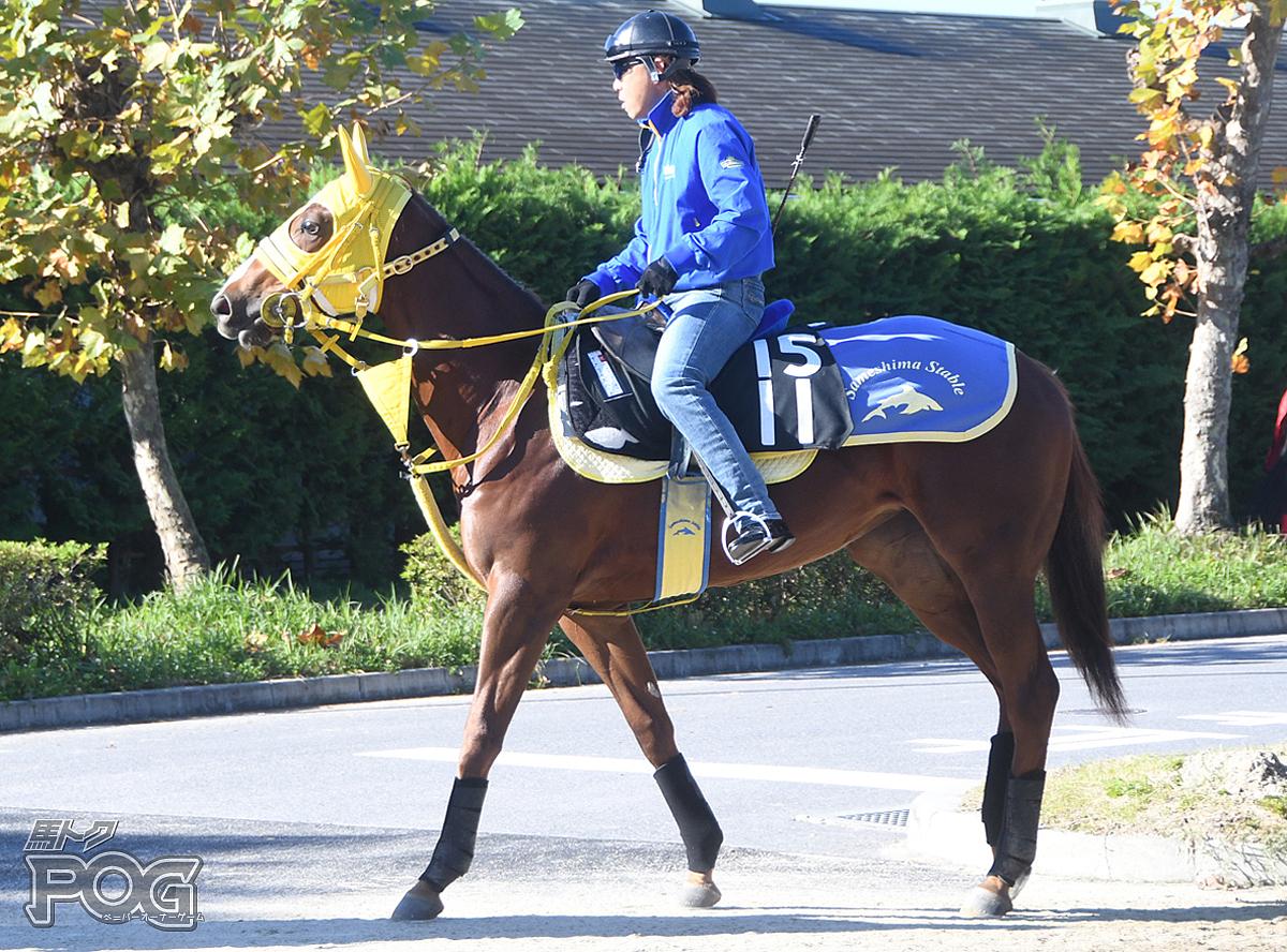 アメリカズハートの馬体写真