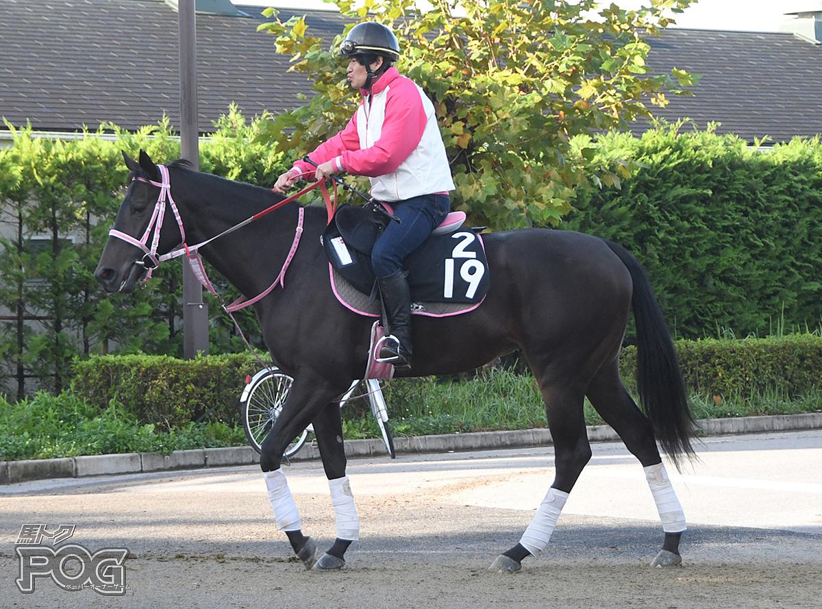カトレアの馬体写真