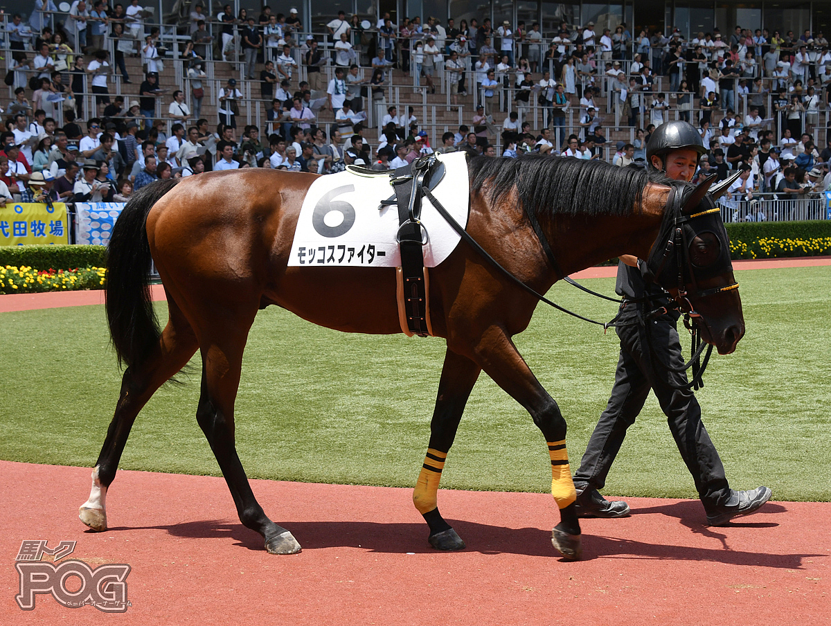 モッコスファイターの馬体写真