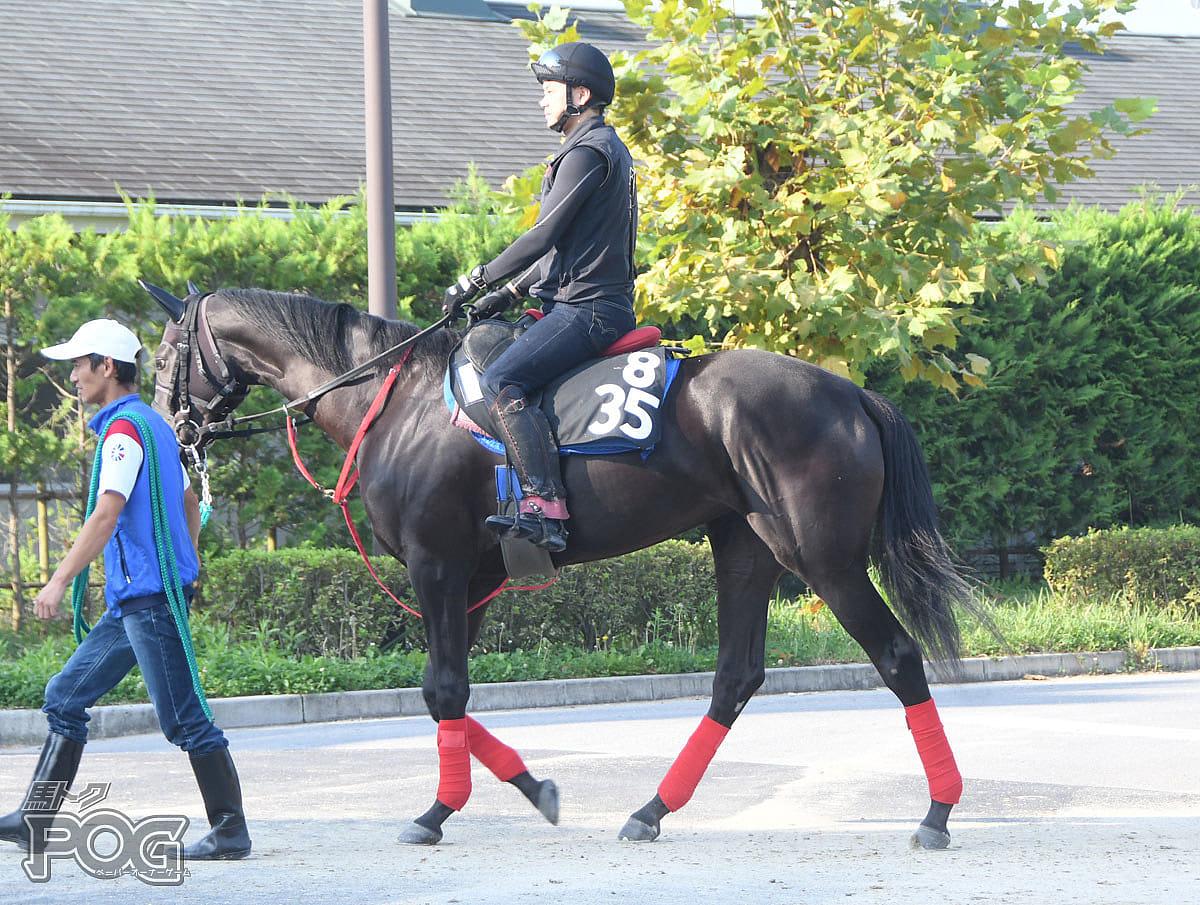 ビナロータスの馬体写真