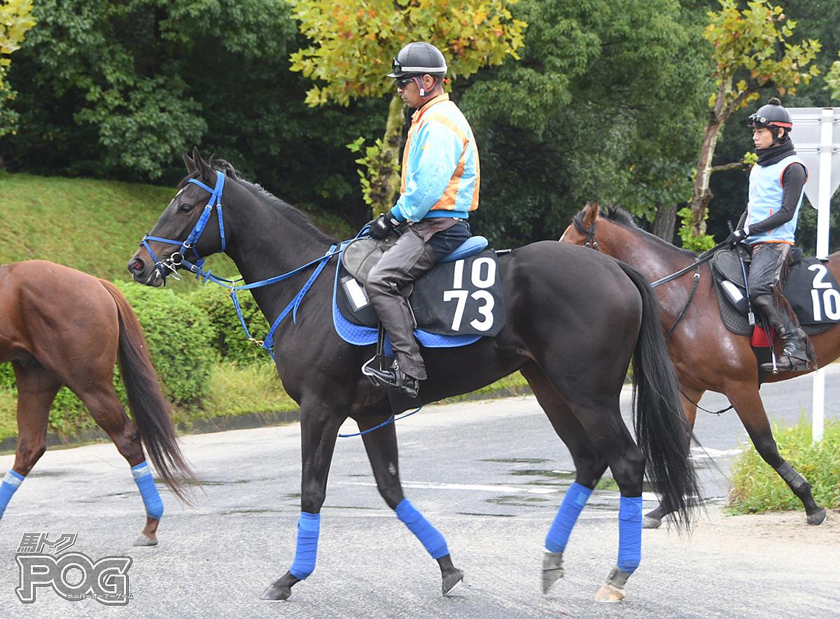 モハンマディの馬体写真