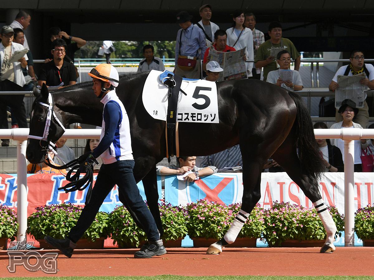 コスモロッソの馬体写真