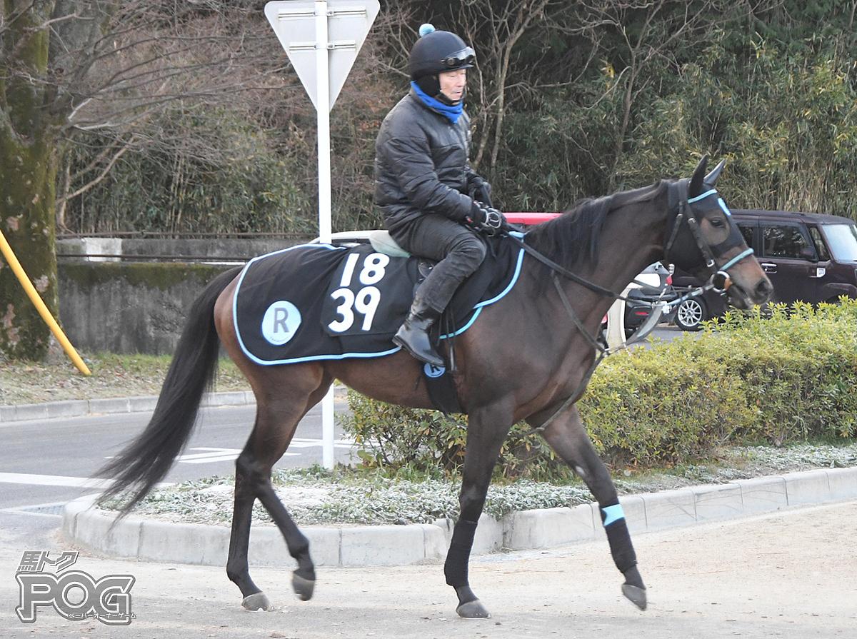 カルチョの馬体写真