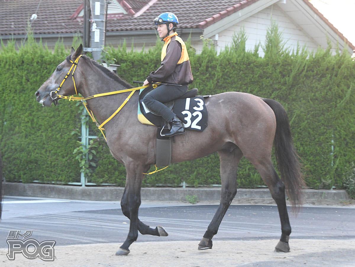 ブランクロワの馬体写真