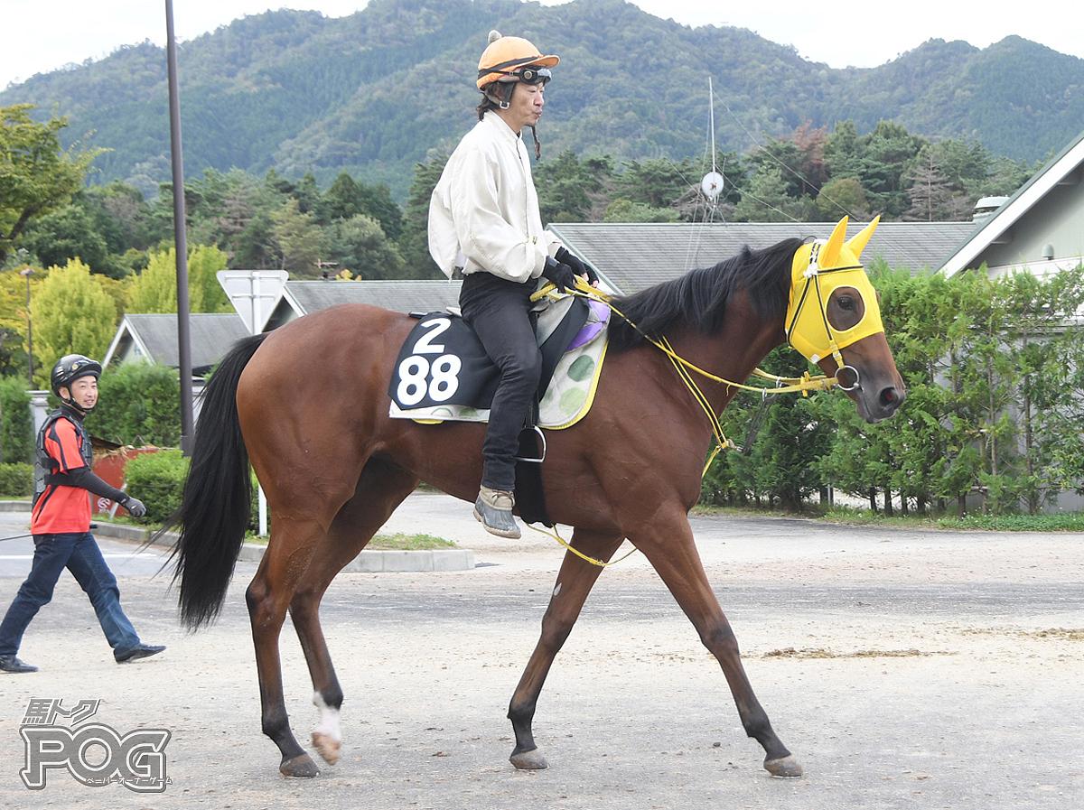 クリノクリストフの馬体写真