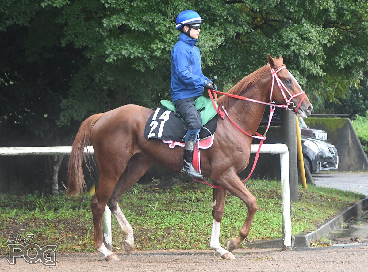 キングズテソーロの馬体写真