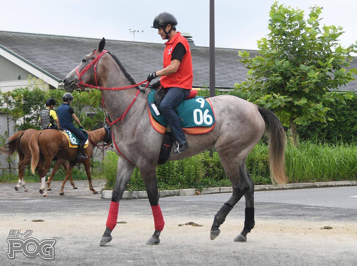 カシノアプローズの馬体写真