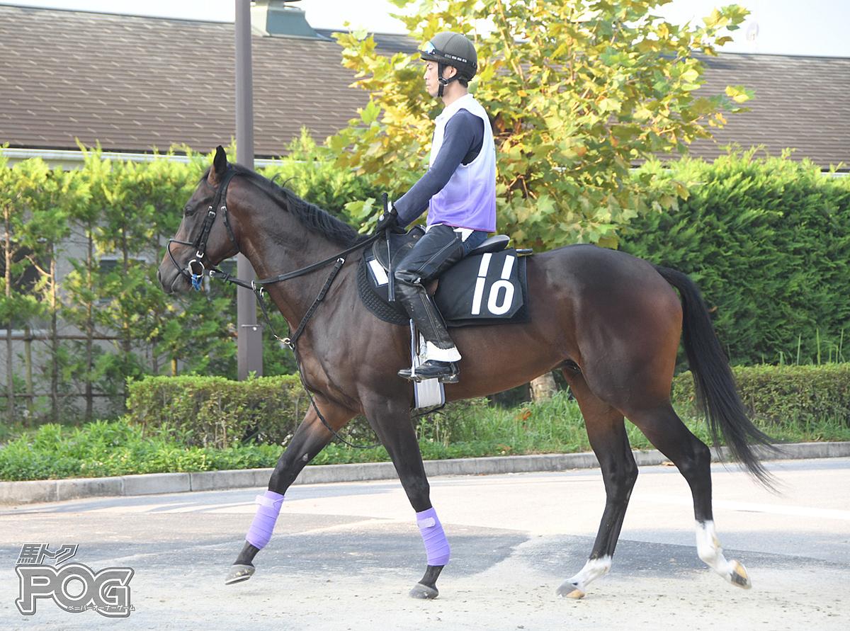 ラセットの馬体写真