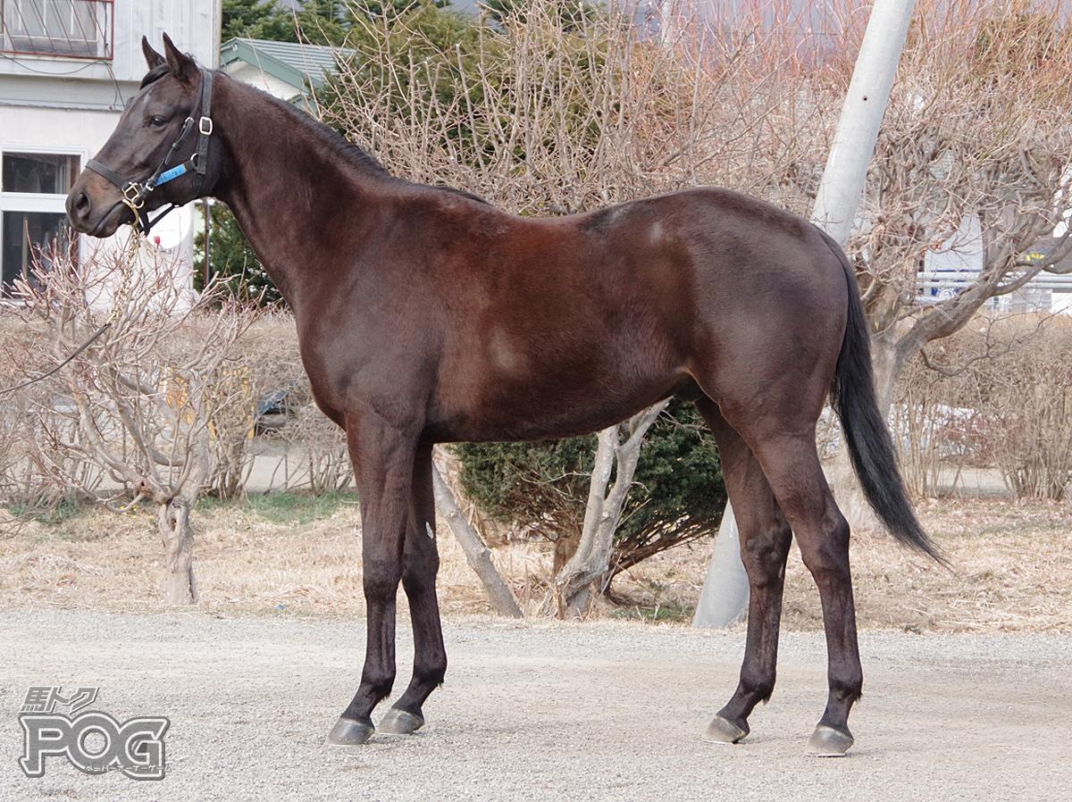 アークカンパネラの馬体写真