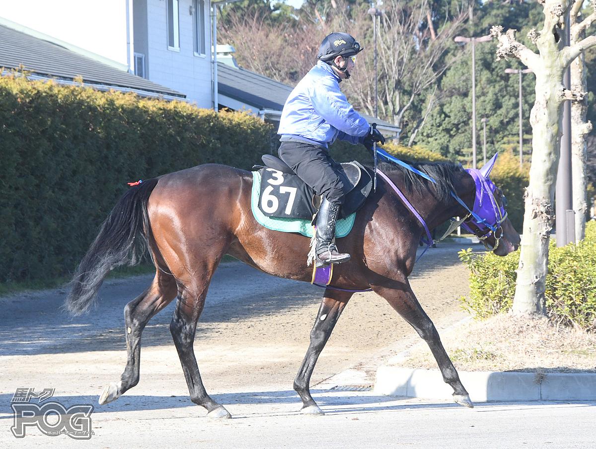 サイモンサーマルの馬体写真