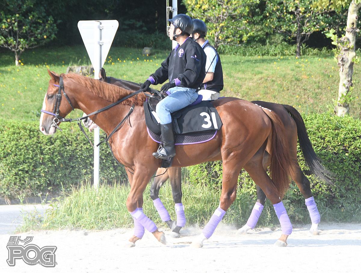 アストルムの馬体写真
