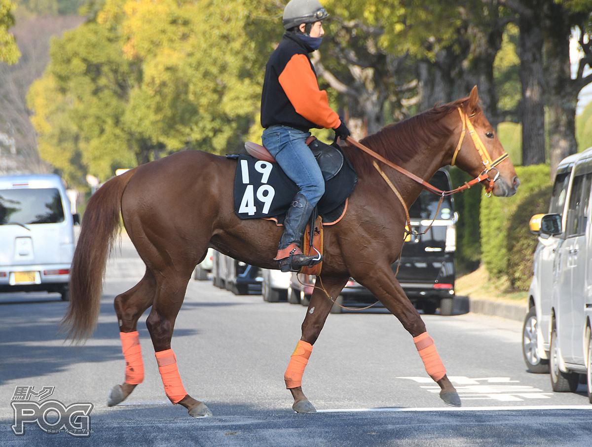 ジャスパーゲランの馬体写真