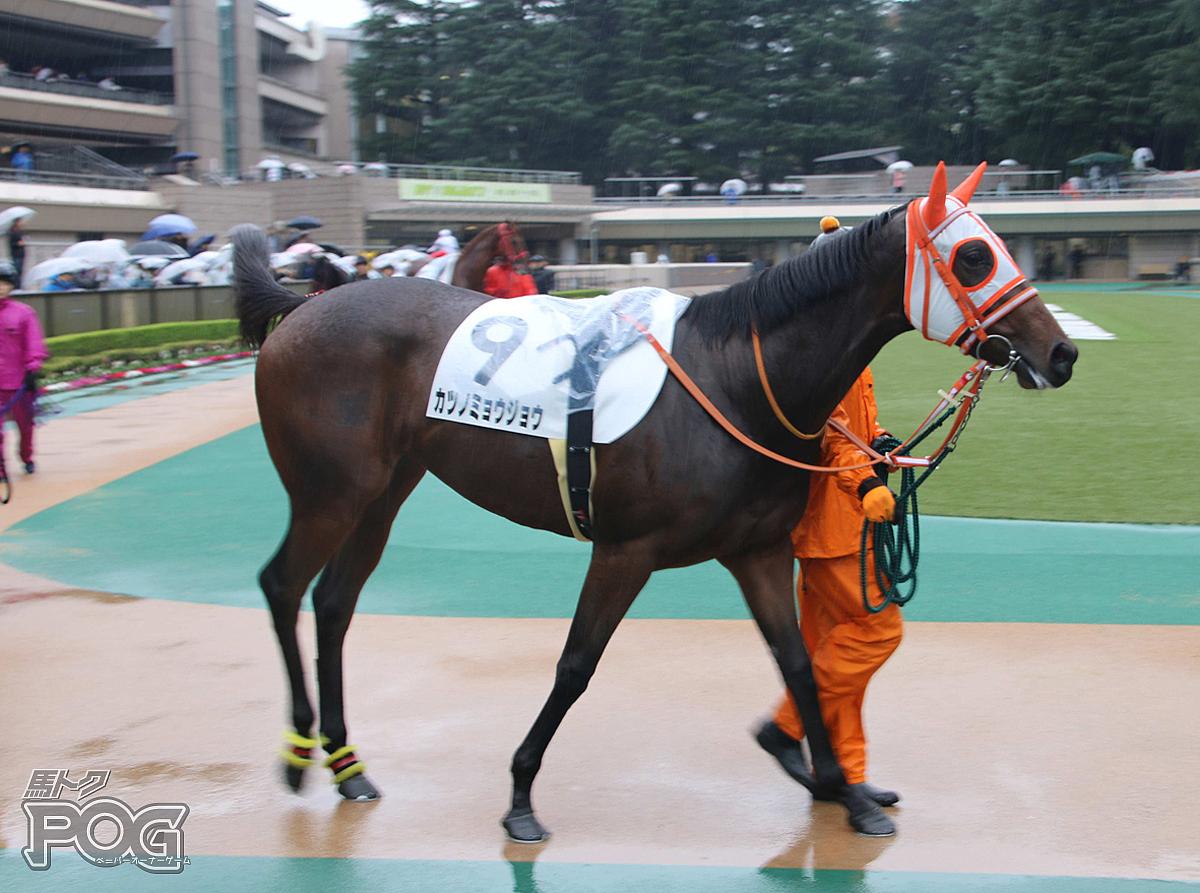 カツノミョウジョウの馬体写真