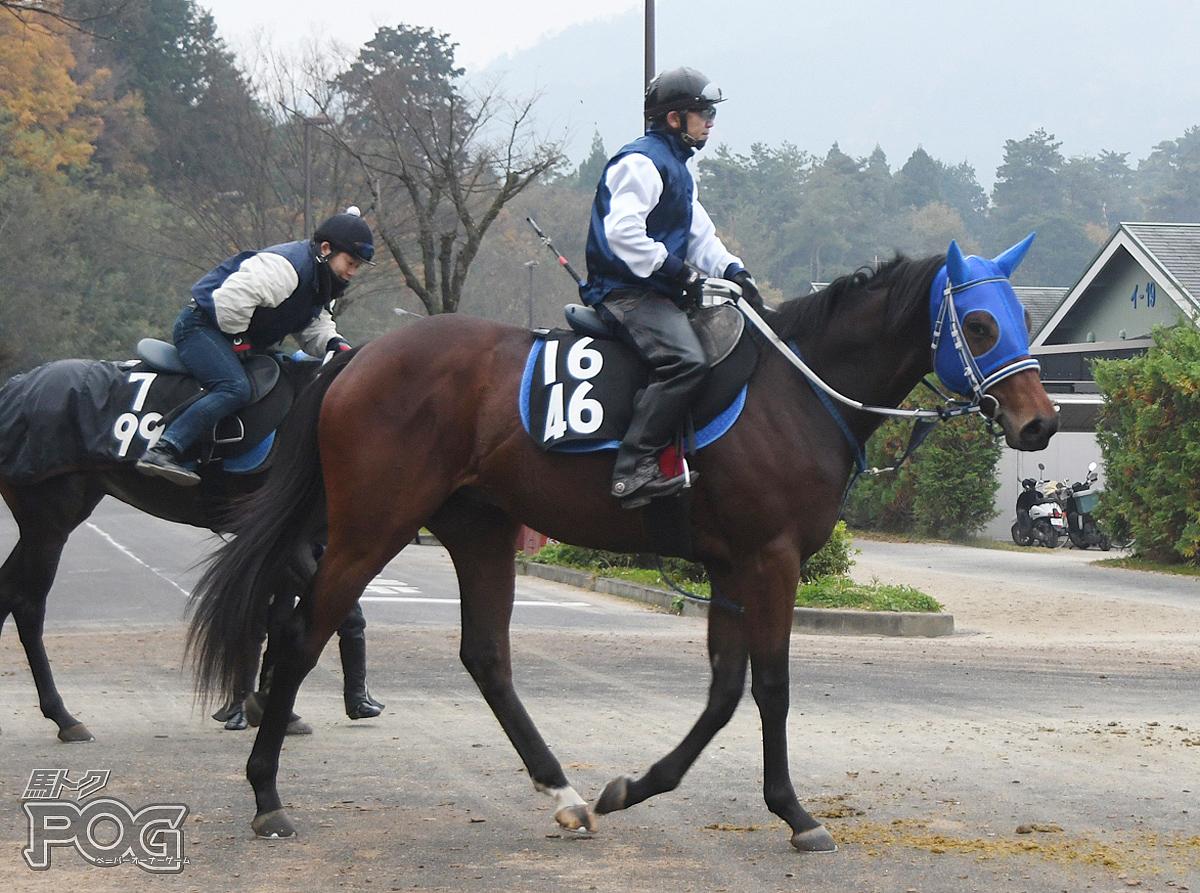 アスクハードスパンの馬体写真