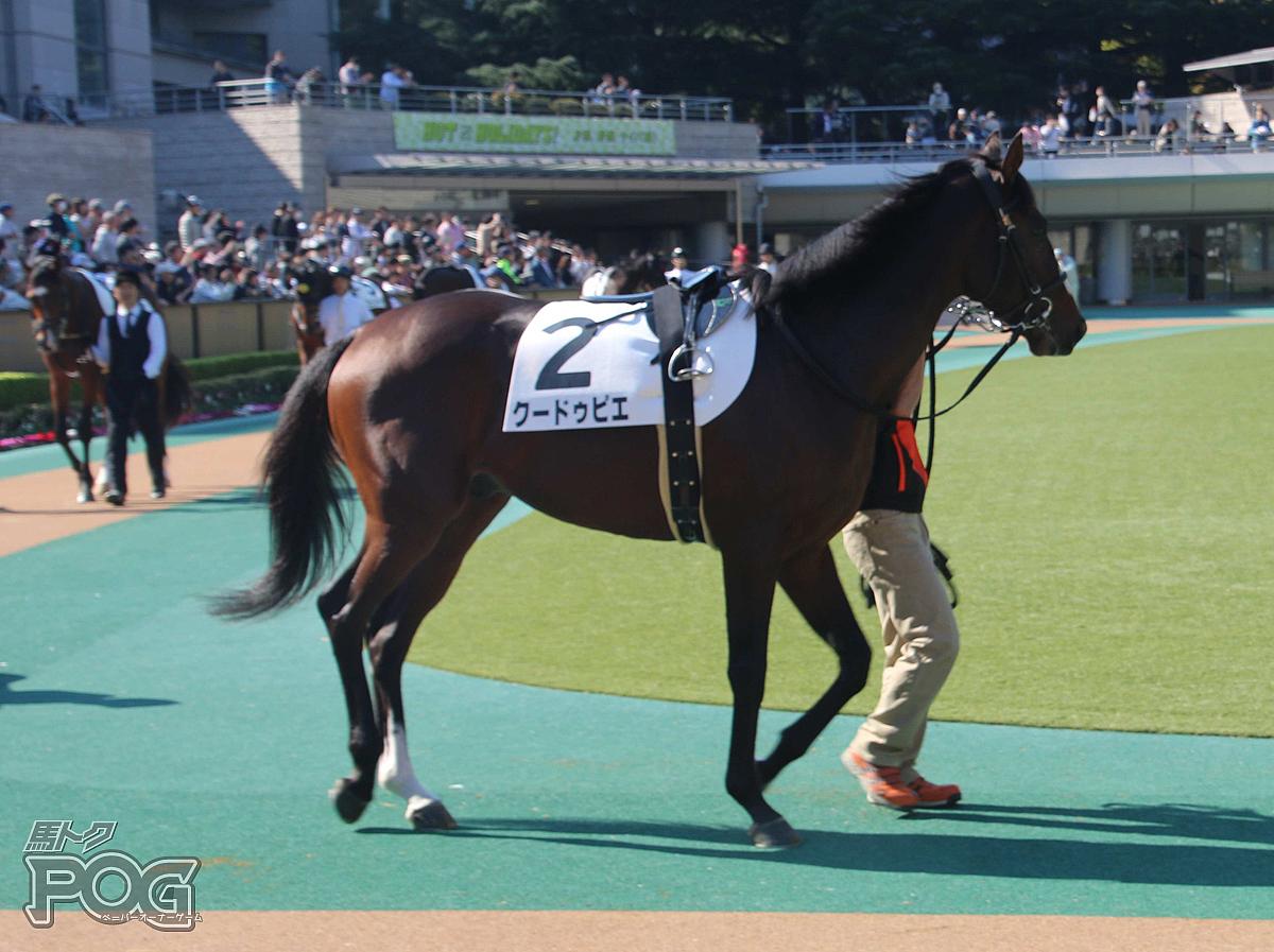 クードゥピエの馬体写真
