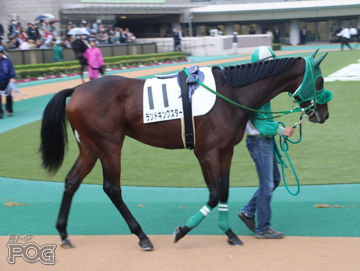 ランドキングスターの馬体写真