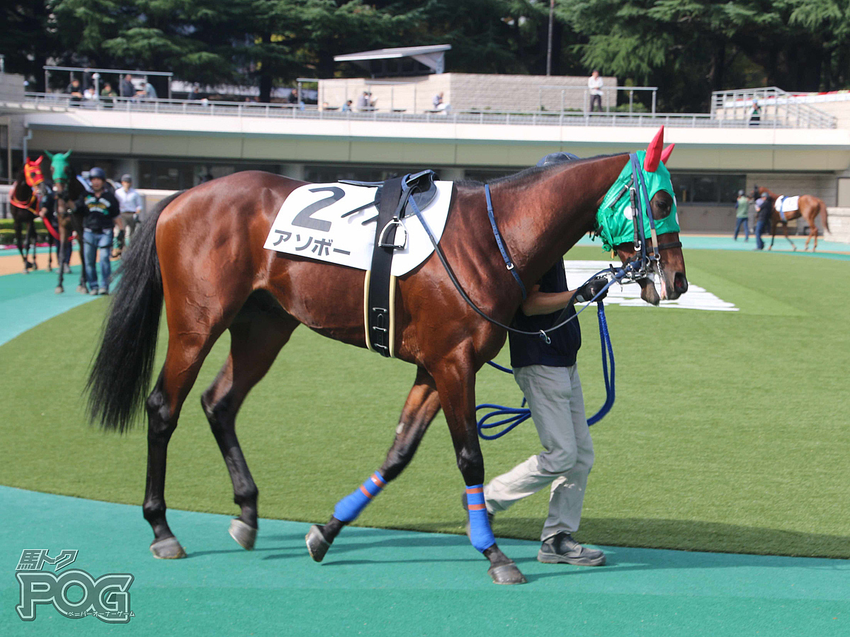 アソボーの馬体写真