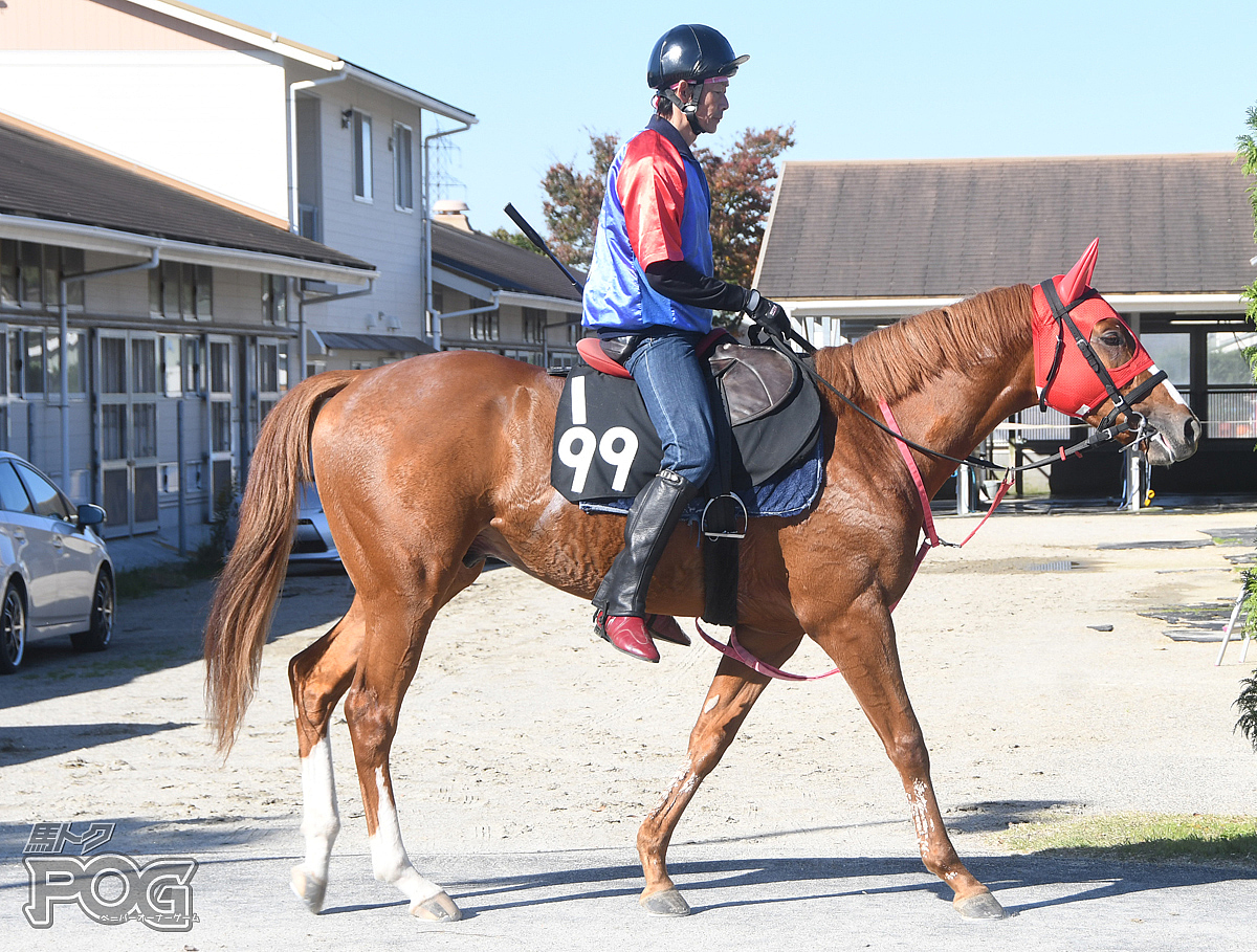 ガイドの馬体写真
