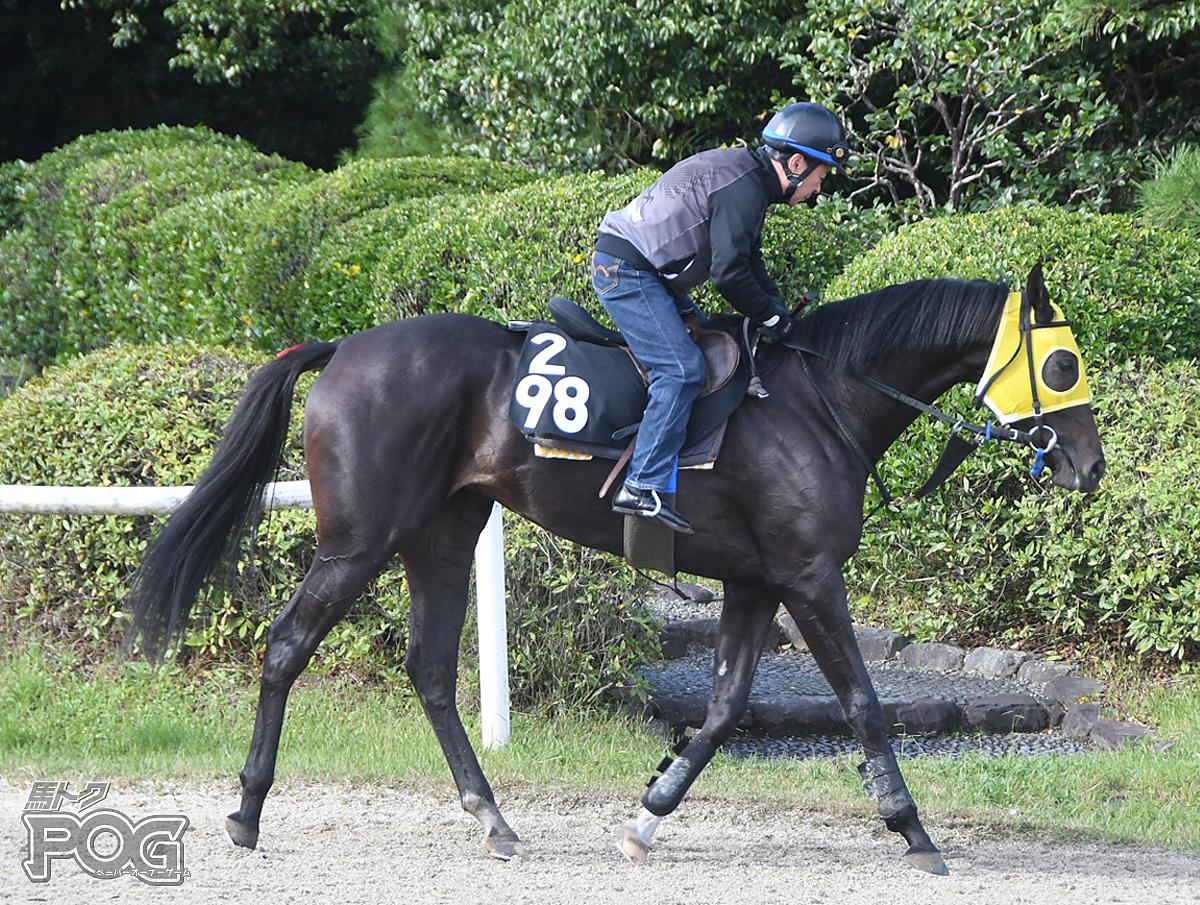 クリノヤンソンの馬体写真