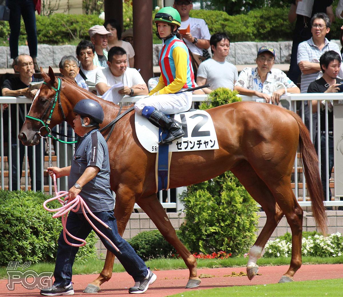 セブンチャンの馬体写真