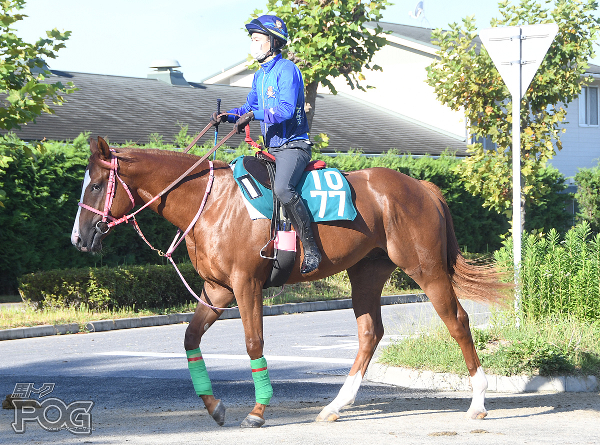 アポロロッキーの馬体写真