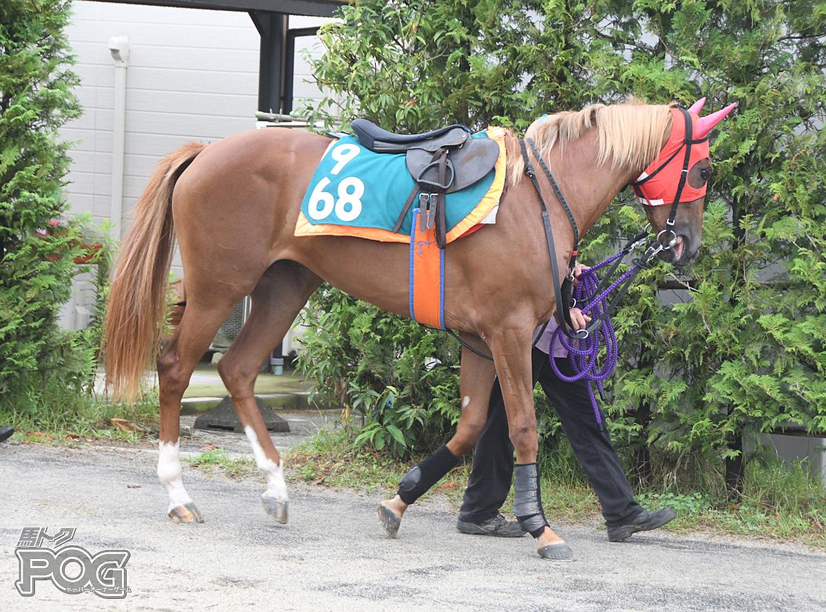 カシノシャインの馬体写真