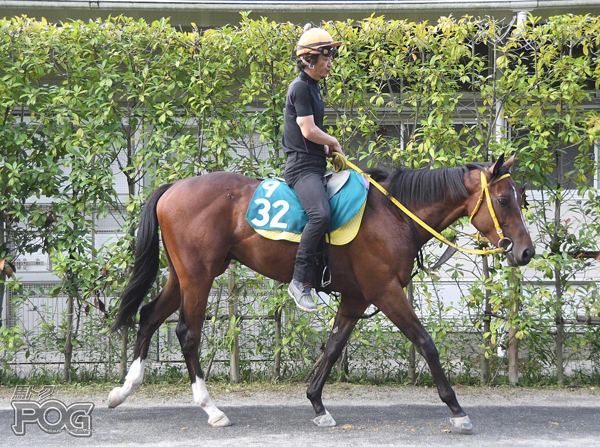 ケンイーサリアムの馬体写真
