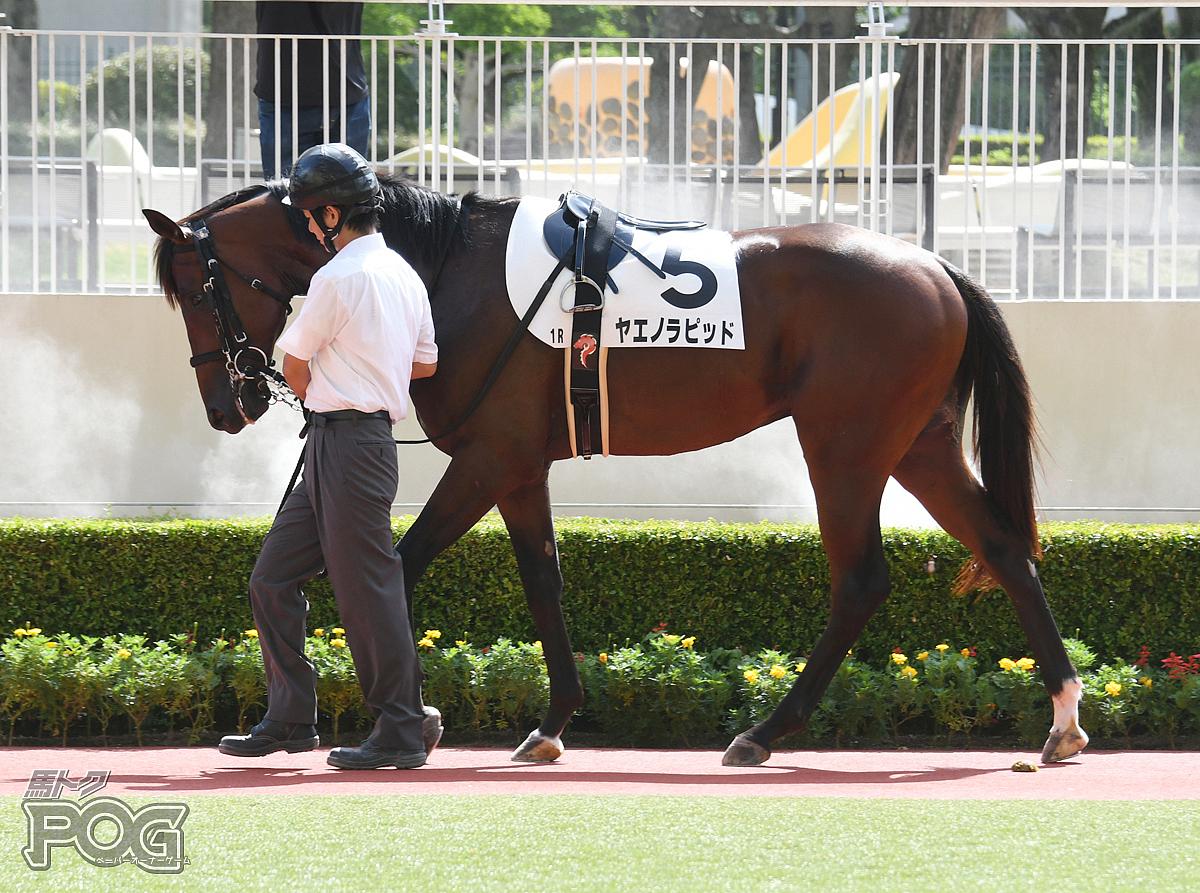 ヤエノラピッドの馬体写真