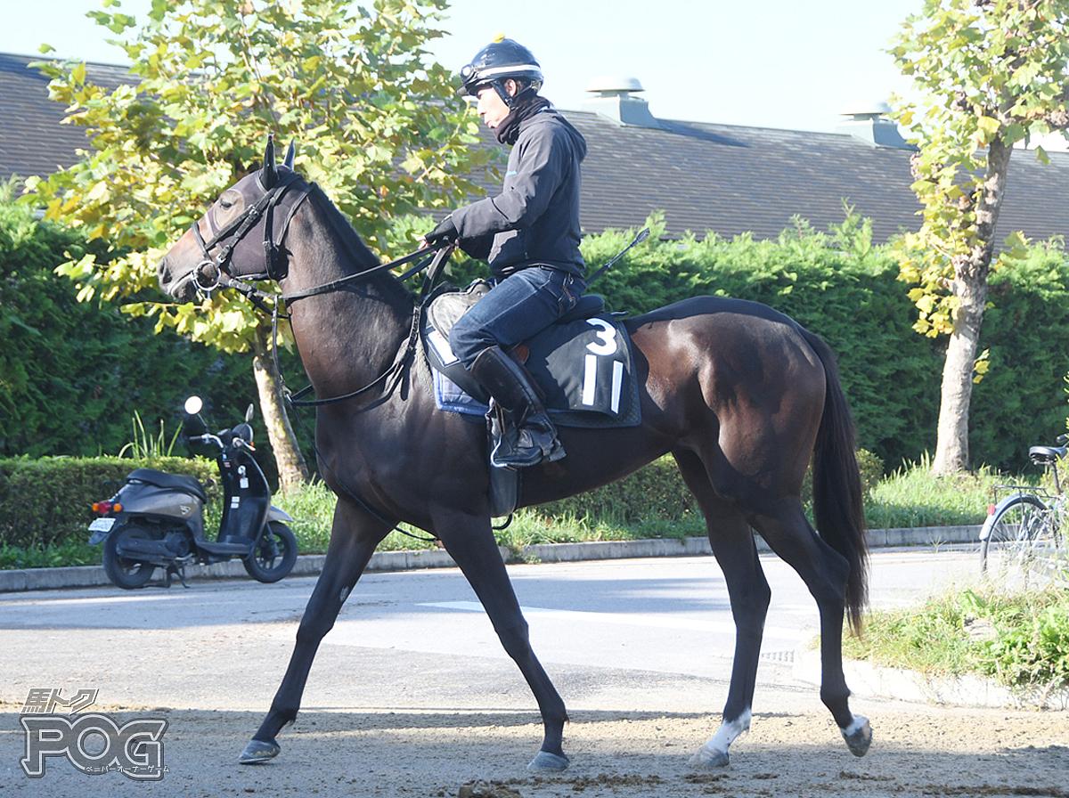 クロヅルストーリーの馬体写真