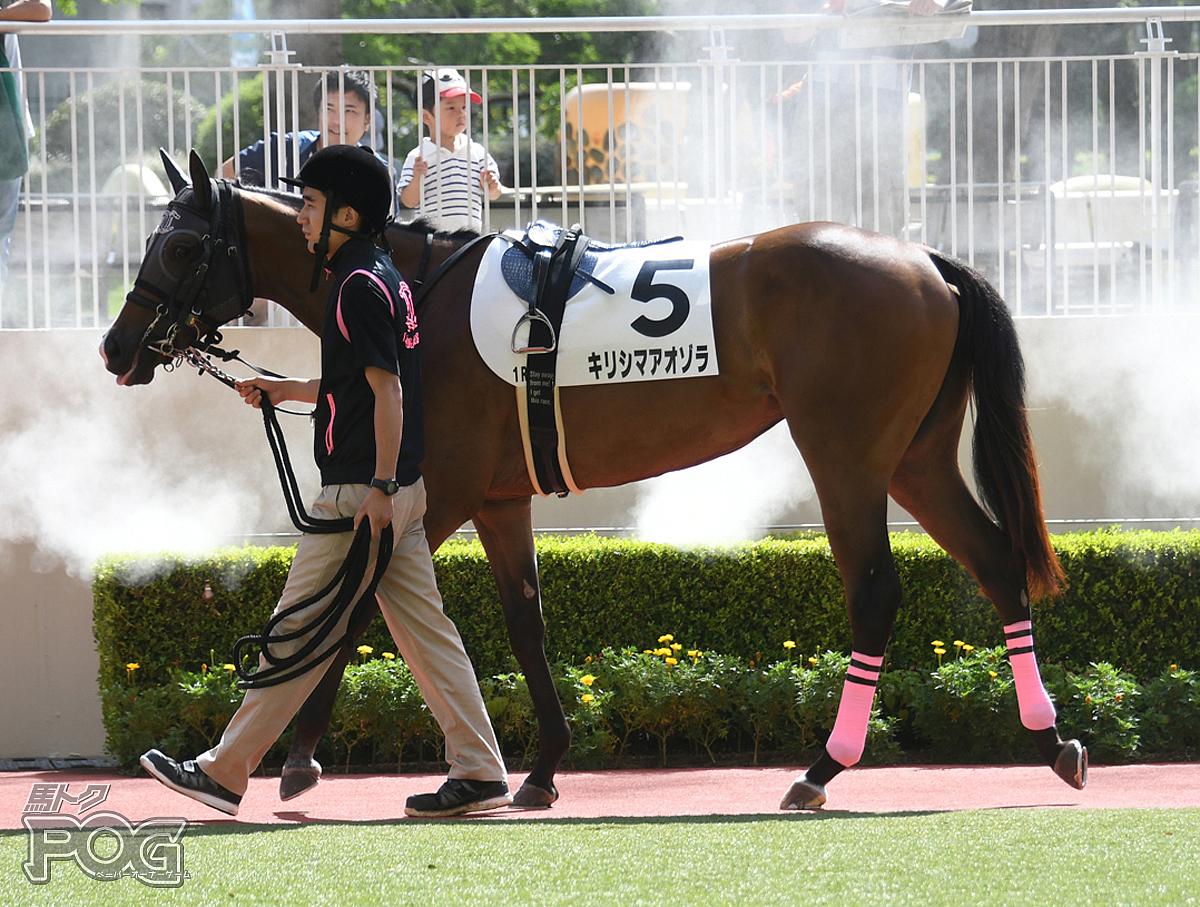 キリシマアオゾラの馬体写真