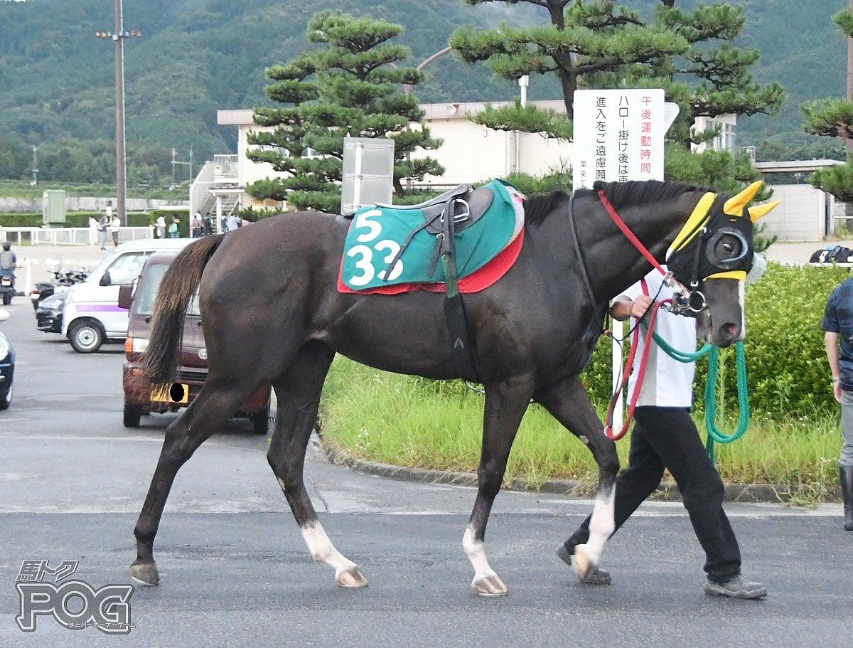 ズッチーナの馬体写真