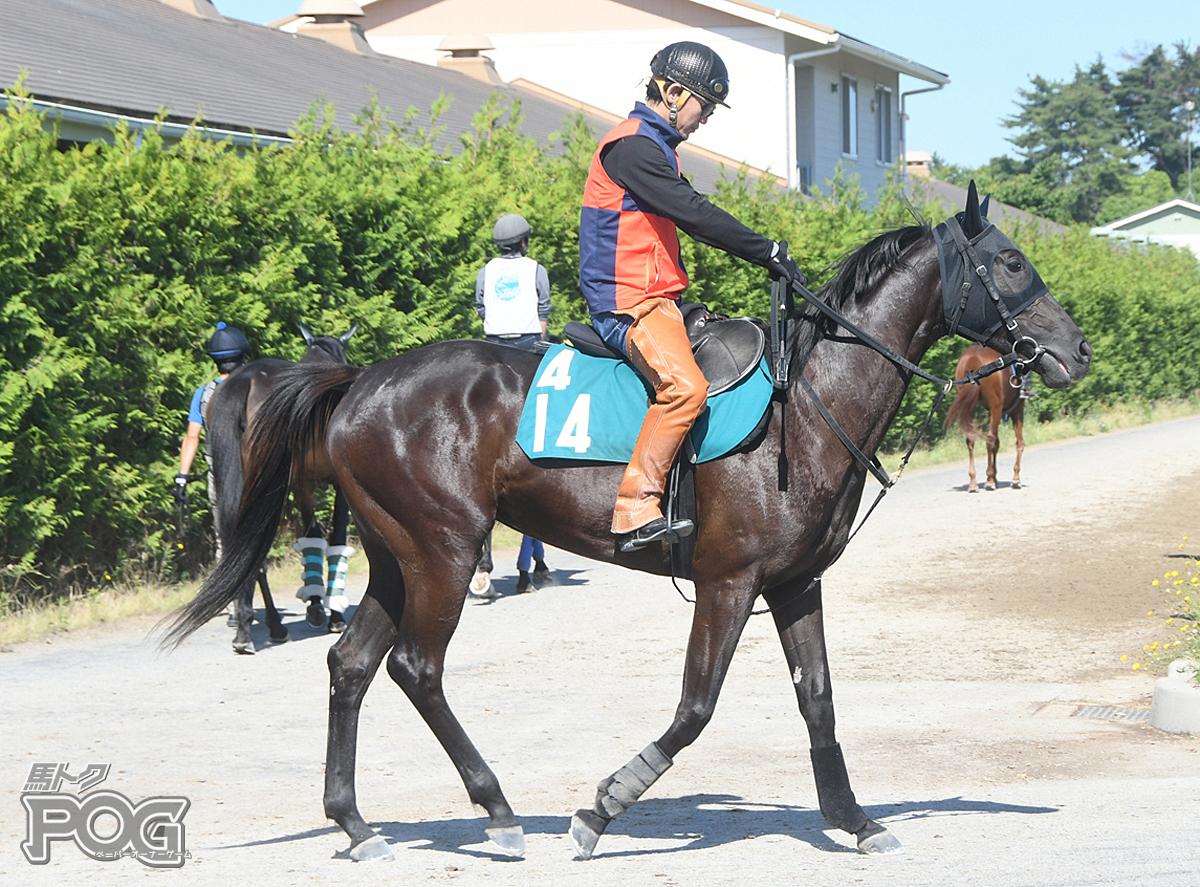 テイエムハエオゴの馬体写真