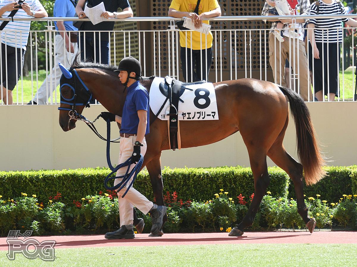 ヤエノプリーマの馬体写真