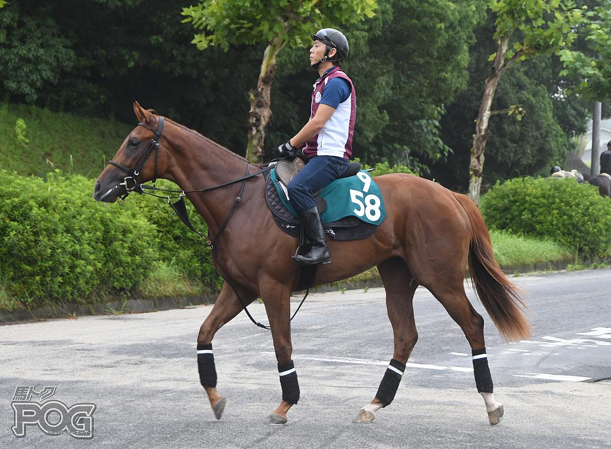 オペラグローブの馬体写真