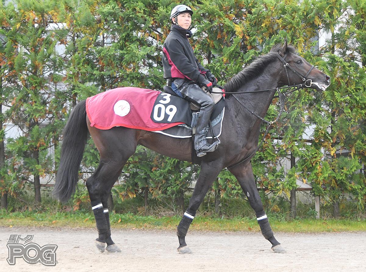 グレートシールの馬体写真