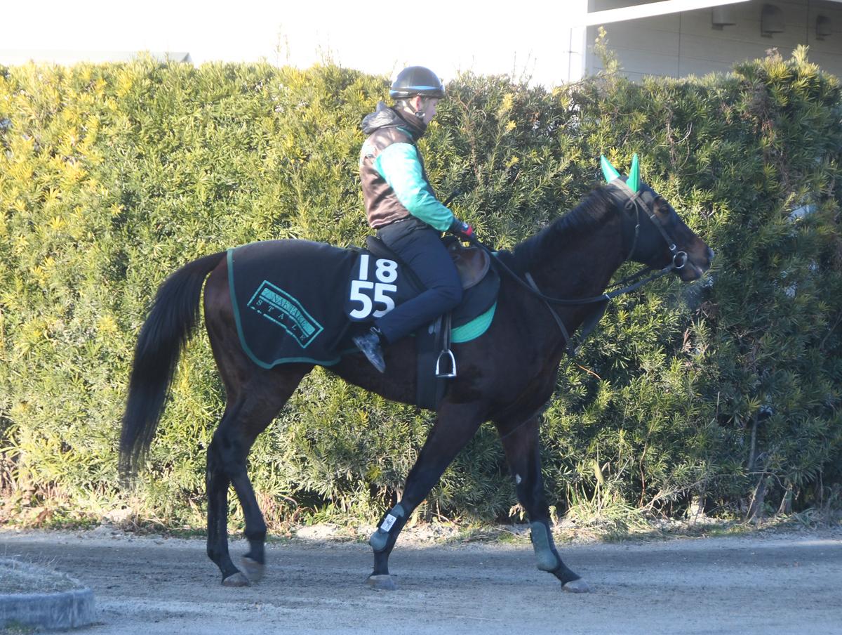 ソウルセイバーの馬体写真