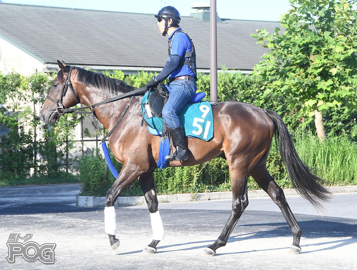 ジャンダルムの馬体写真