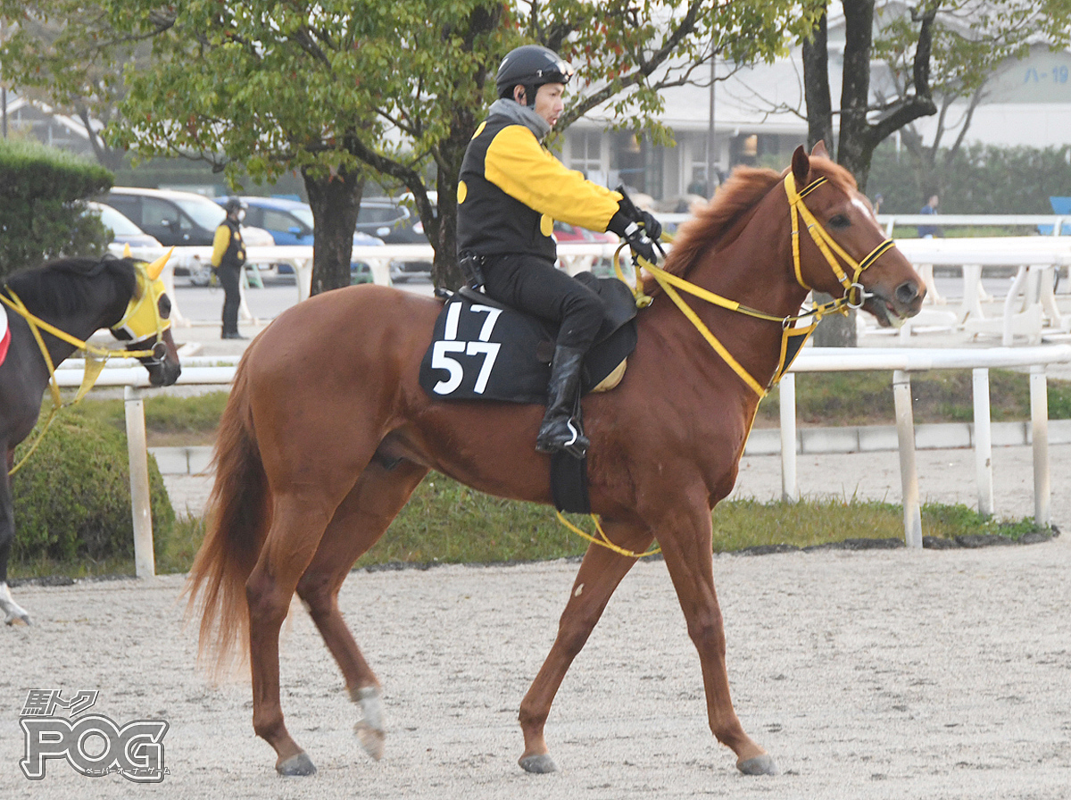 モズダディーの馬体写真