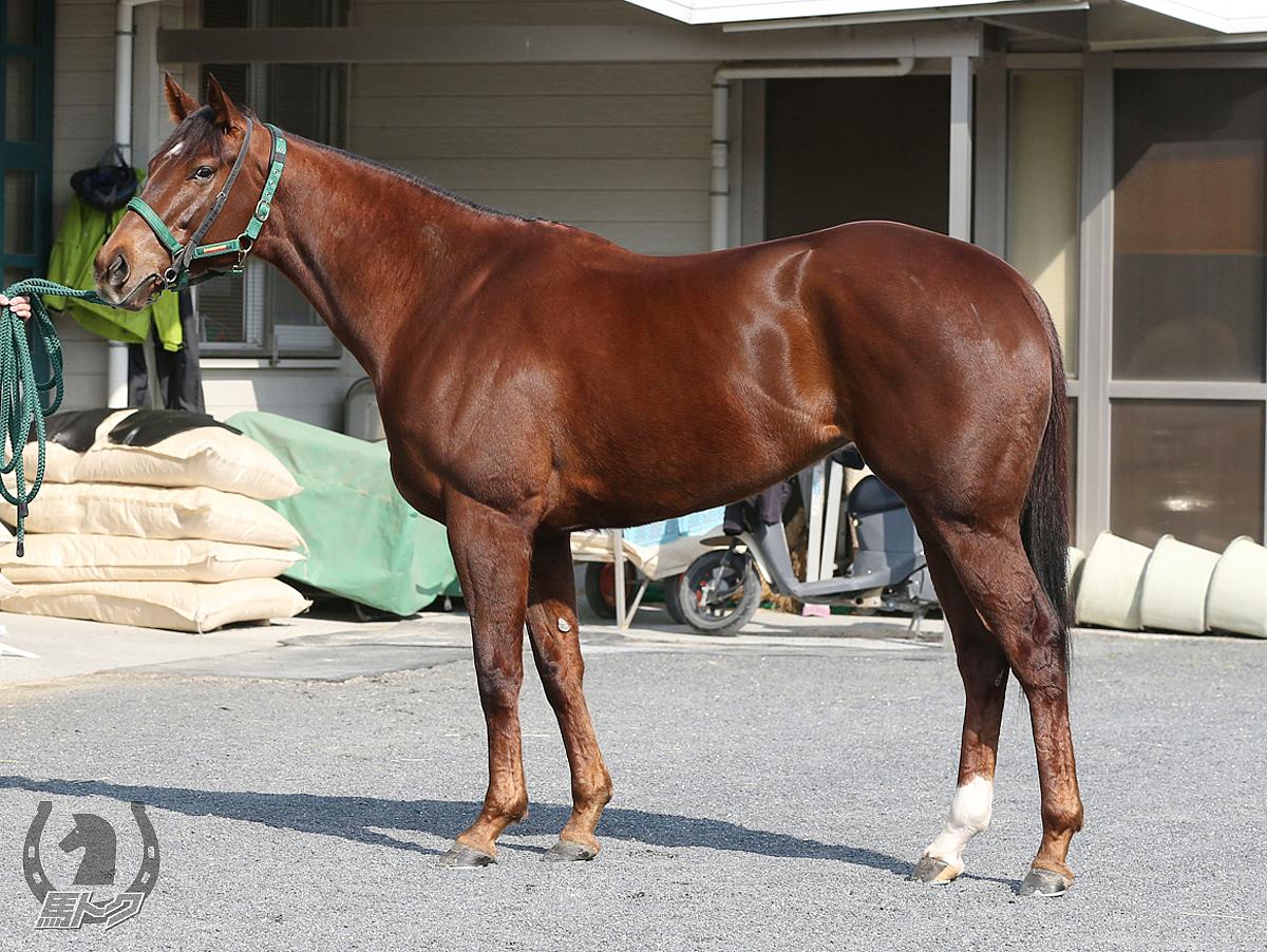 モズスーパーフレアの馬体写真