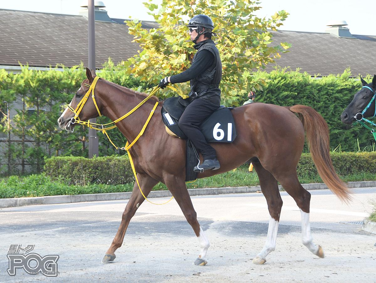 アメリカンワールドの馬体写真